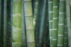 bambus, jalousie